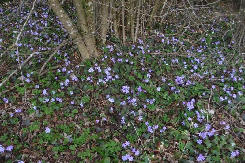 Blütenzauber am Lech P1250424