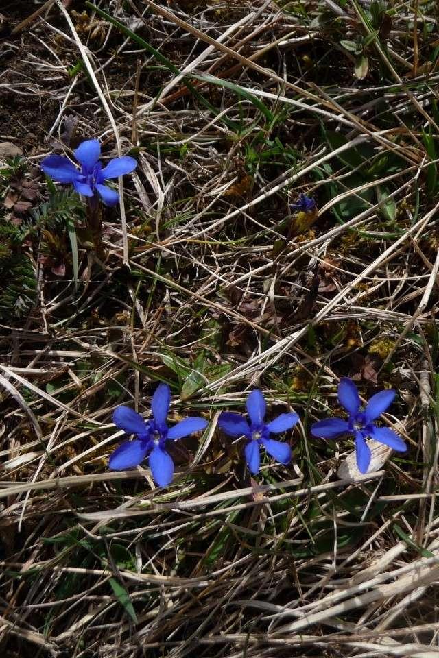 Blütenzauber am Lech P1250428