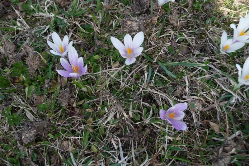 Blütenzauber am Lech P1250430