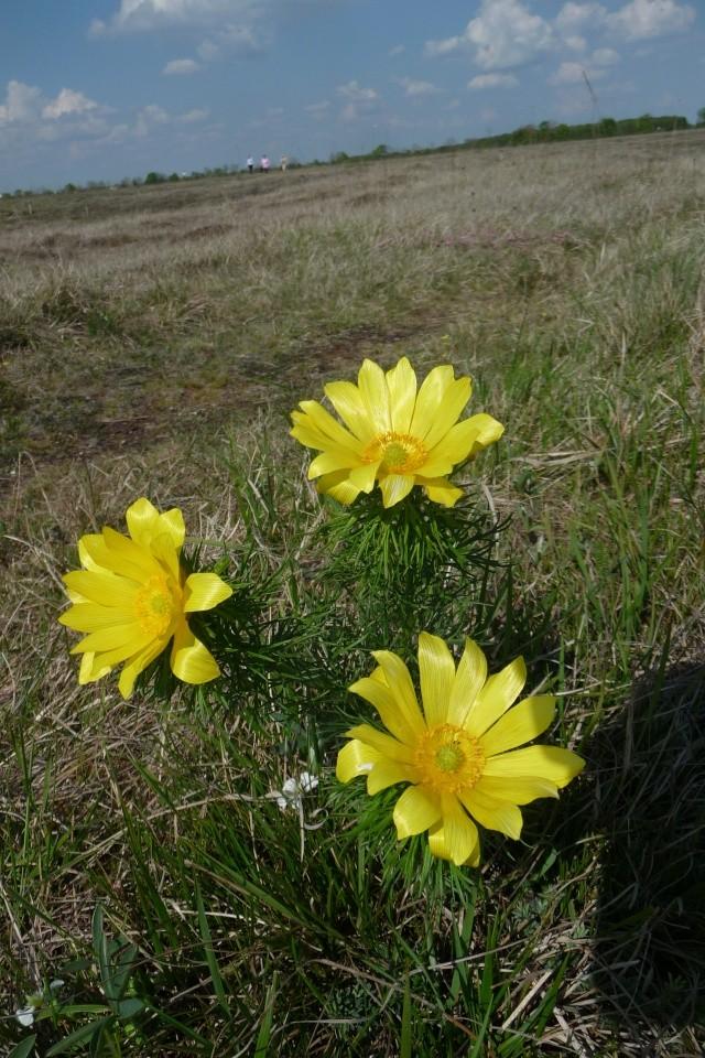 Besuch in der Garchinger Heide, in der Nähe von O&M P1250820
