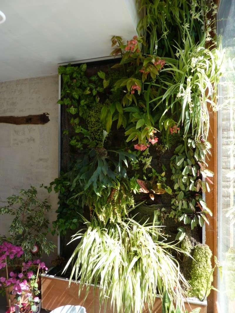 [PROJET TERMINE] Mur végétalisé 1.35m / 3.10m de haut maxi P1020110