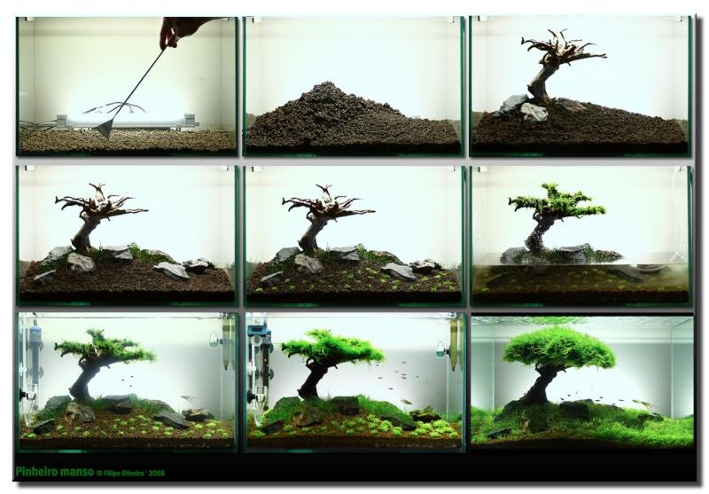 Mon eau pour mon biotope asiatique - Page 2 Biotop12