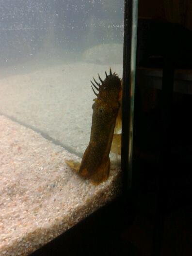 Aquarium 100L reçu déjà peuplé help Pikpik11