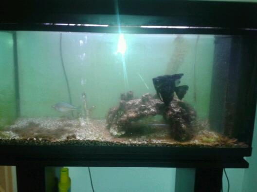 Aquarium 100L reçu déjà peuplé help Poisso13