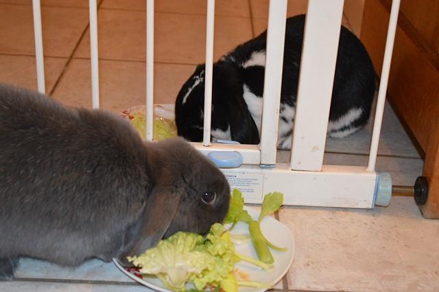 Hermine, lapine bélier, née en 2012 - Page 3 Dsc_0910