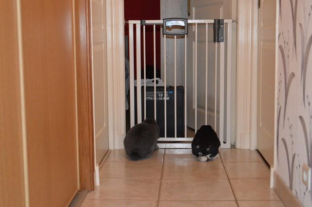 Hermine, lapine bélier, née en 2012 - Page 3 Dsc_0929