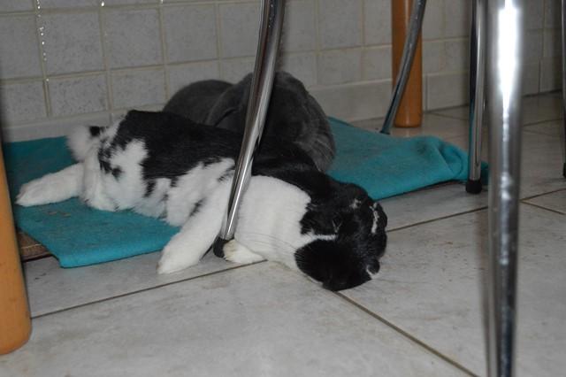 Hermine, lapine bélier, née en 2012 - Page 4 Dsc_1010