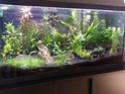 Mes (plus) de 60 plantes dans mon 240 litres - Page 6 20131111