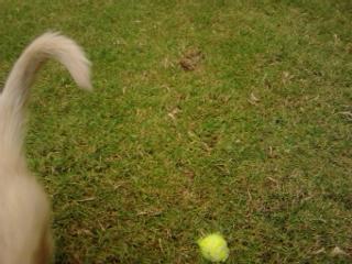 is it a husky ?? plz help 2013-118