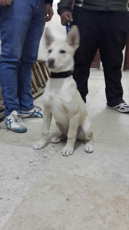 is it a husky ?? plz help Img-2010