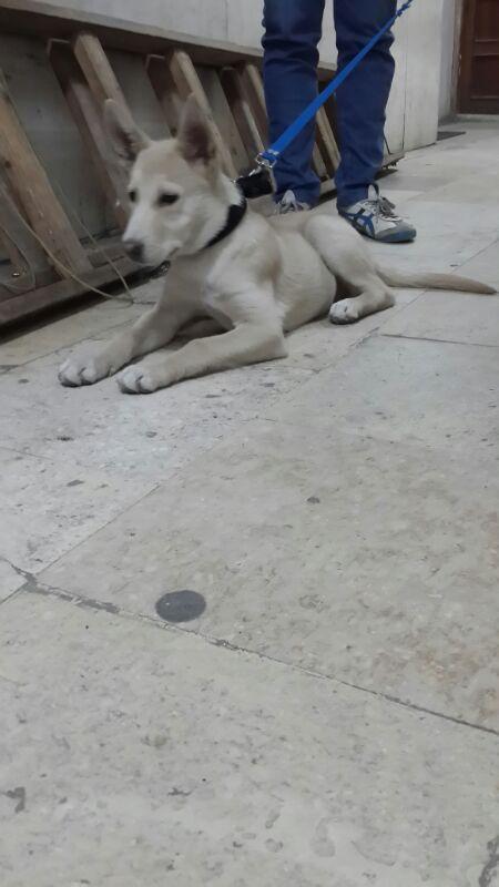 is it a husky ?? plz help Img-2012