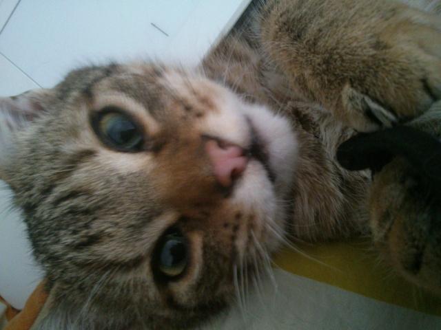 ADOPTE Pedro, chaton male Dsc_0710