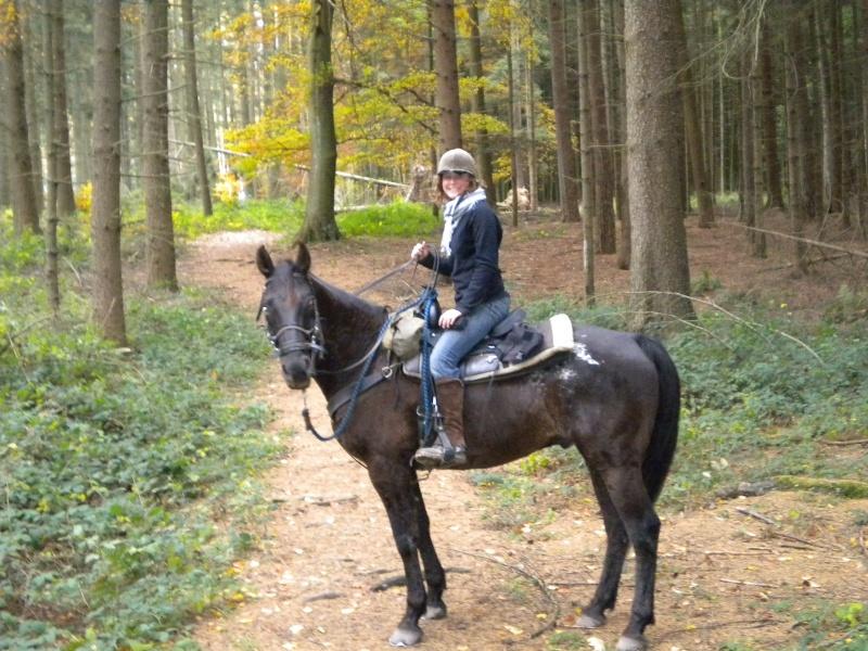 Quel cheval pour un premier TREC ? Dscn0210