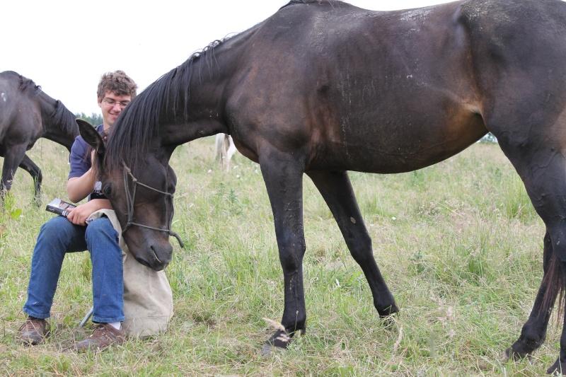 Quel cheval pour un premier TREC ? Img_4512