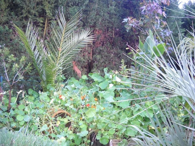 mon jardin dans le 77 - Page 2 Dscn3049