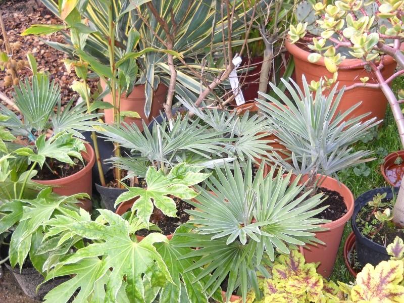 mon jardin dans le 77 - Page 2 Dscn3050