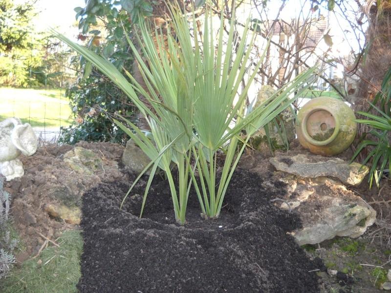 mon jardin dans le 77 - Page 2 Dscn3331