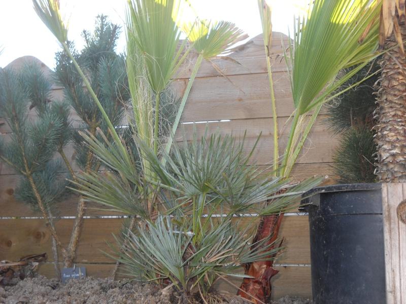 mon jardin dans le 77 - Page 2 Dscn3333