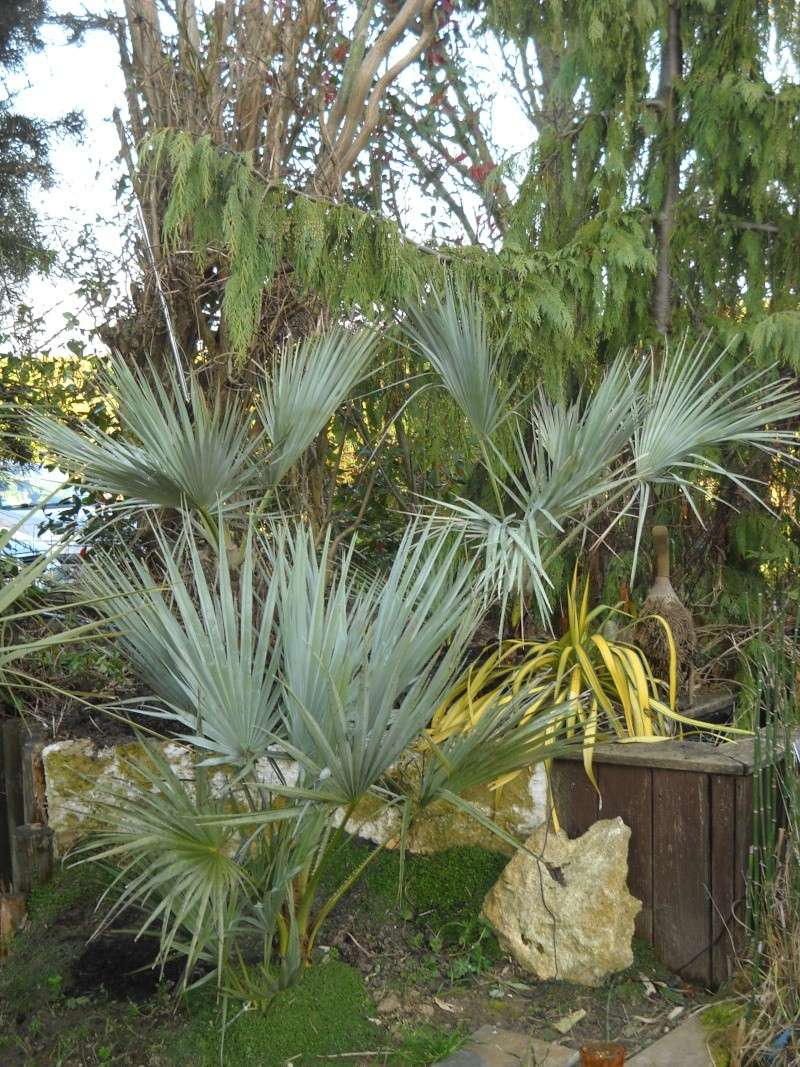 mon jardin dans le 77 - Page 2 Dscn3334