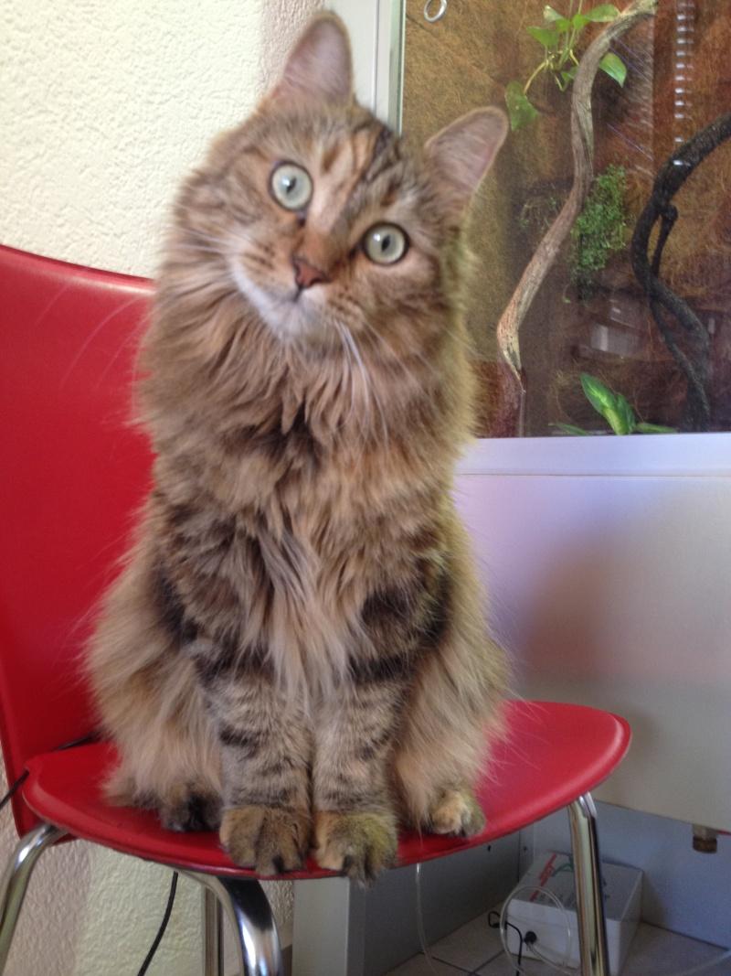 La devinette du mois : Quelle est la robe de ce chat ? 20411