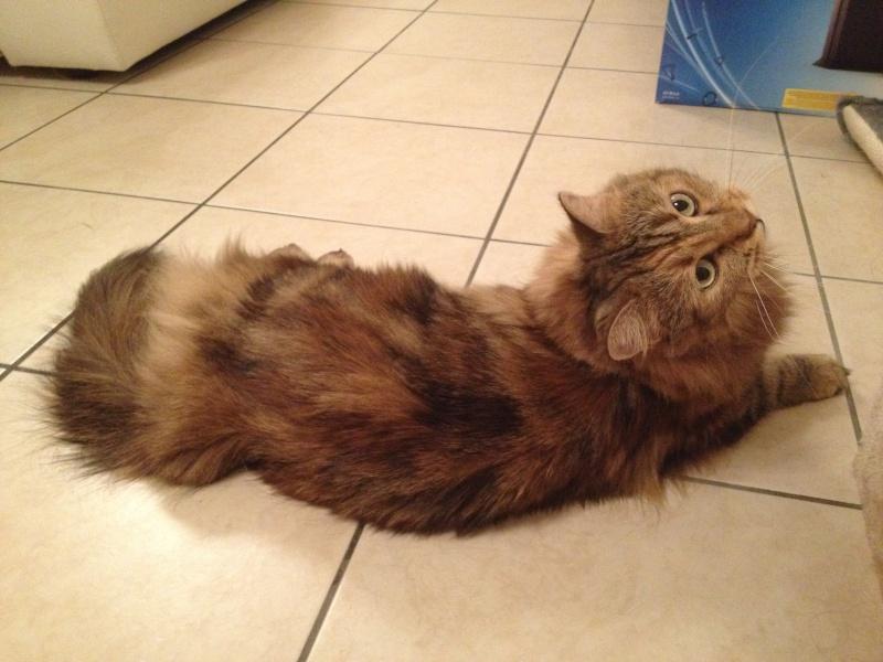 La devinette du mois : Quelle est la robe de ce chat ? Aya_0111