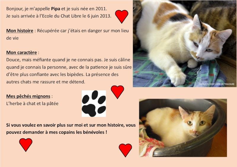 PIPA Pas adoptable 06/04/21 décédée Pipa10