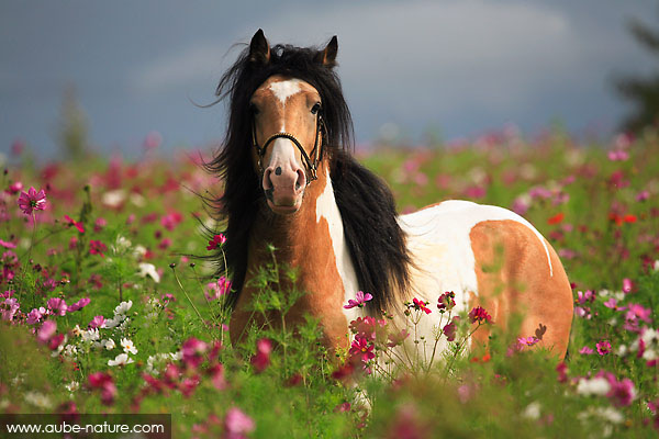 Horses of Athéna 3428-i10