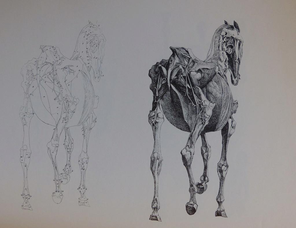 George Stubbs : artiste peintre et anatomiste.  1280px30