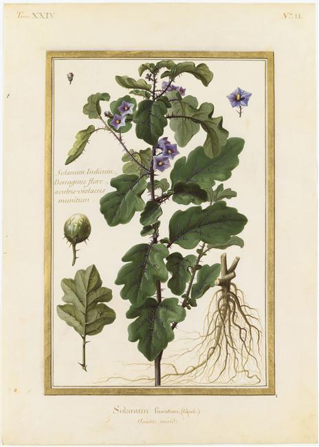 La peinture des fleurs : Sophie de Fuligny-Damas, marquise de Grollier 13-57810