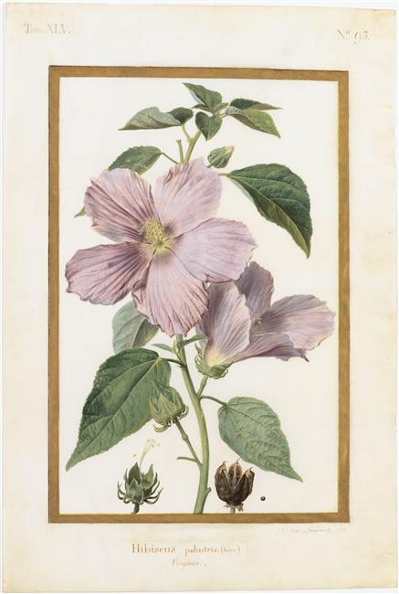 La peinture des fleurs : Sophie de Fuligny-Damas, marquise de Grollier 13-60110
