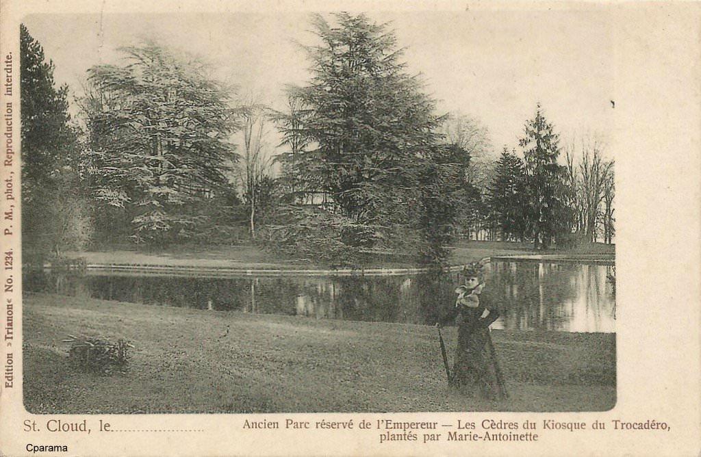Les cèdres de Marie-Antoinette, jardin du Trocadéro, parc de Saint-Cloud 14550110