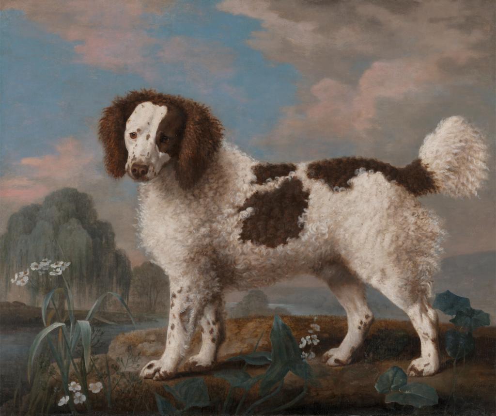 George Stubbs : artiste peintre et anatomiste.  321