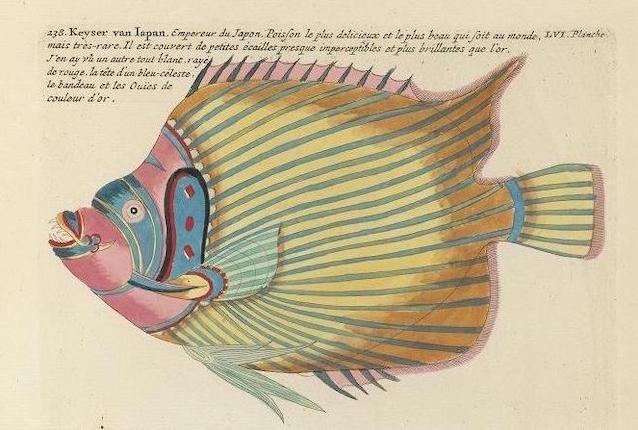 Des poissons tropicaux découverts en 1719 33452710
