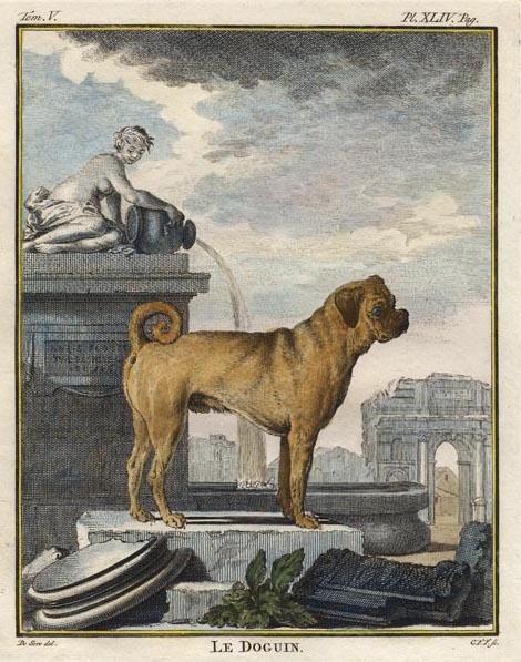 Des noms de races de chiens au XVIIIe siècle 8298610