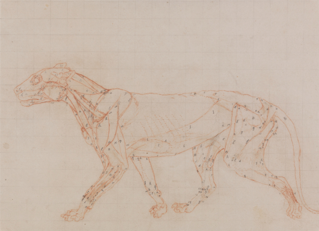 George Stubbs : artiste peintre et anatomiste.  Ba-obj10