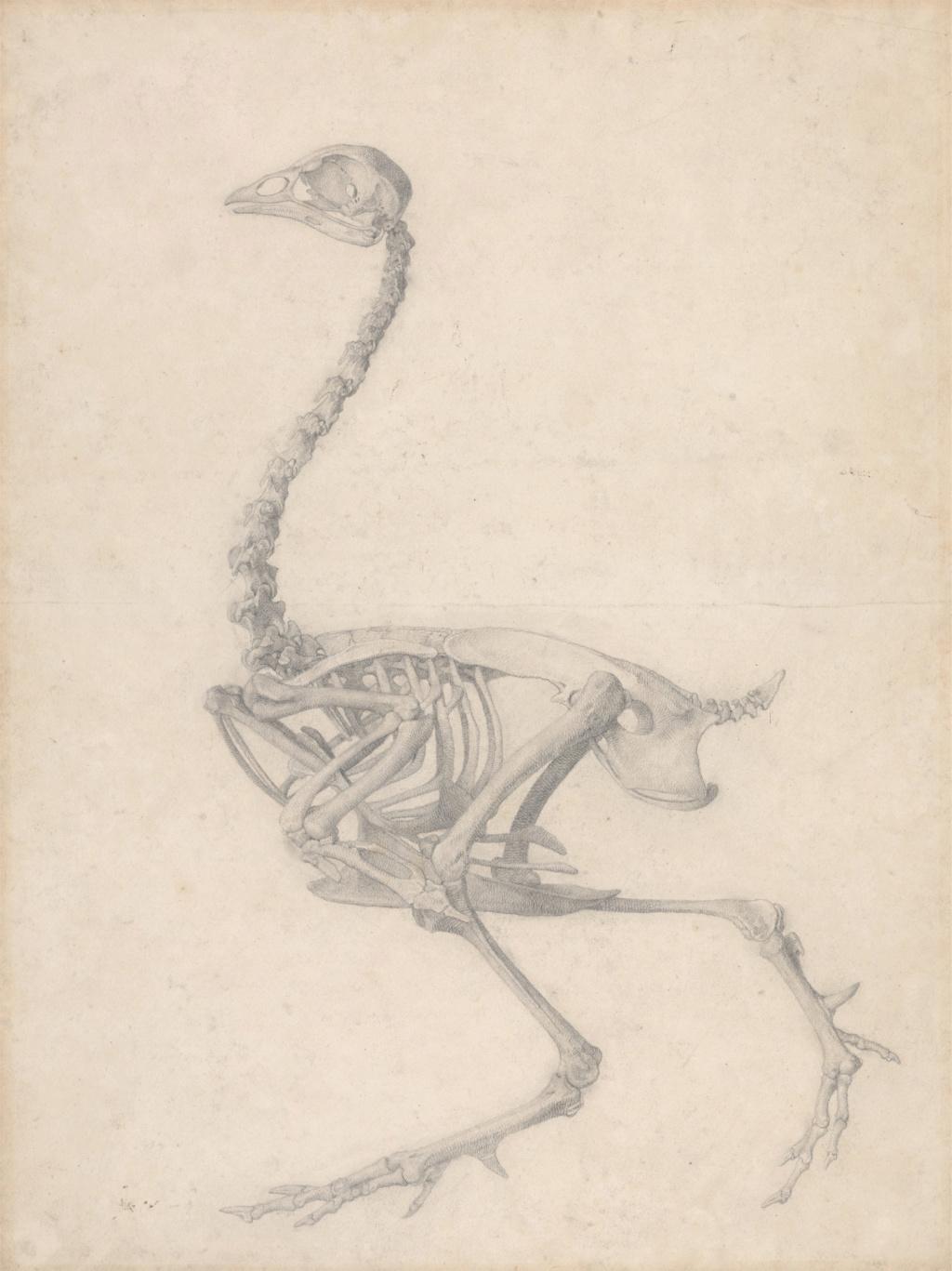 George Stubbs : artiste peintre et anatomiste.  Ba-obj11