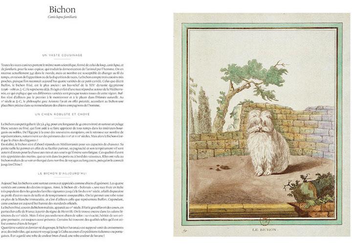 """buffon - """"Histoire naturelle, générale et particulière"""" du comte de Buffon Buffon11"""