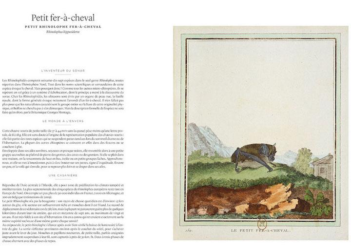"""buffon - """"Histoire naturelle, générale et particulière"""" du comte de Buffon Buffon12"""