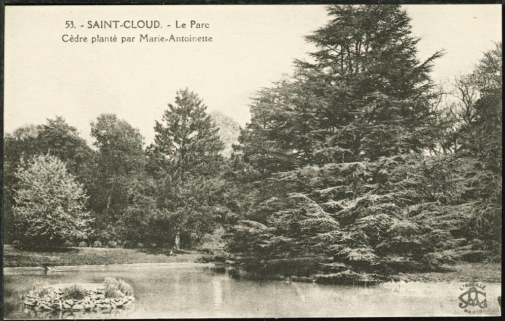 Les cèdres de Marie-Antoinette, jardin du Trocadéro, parc de Saint-Cloud Capt1472