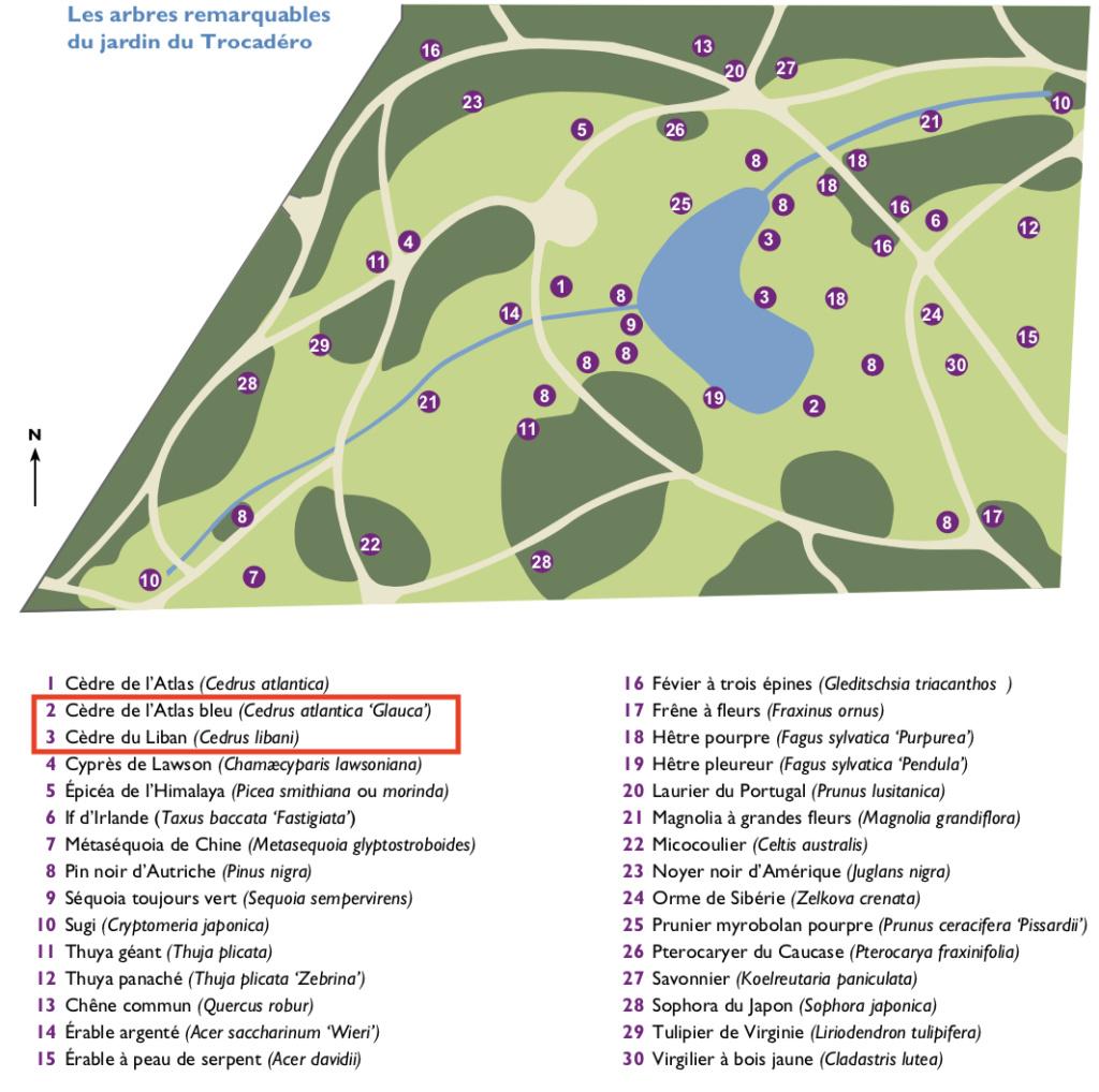 Les cèdres de Marie-Antoinette, jardin du Trocadéro, parc de Saint-Cloud Capt1474