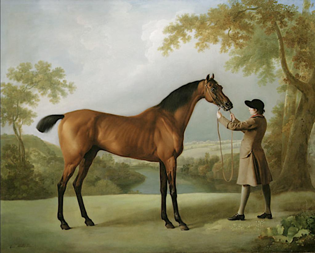 George Stubbs : artiste peintre et anatomiste.  Captu405