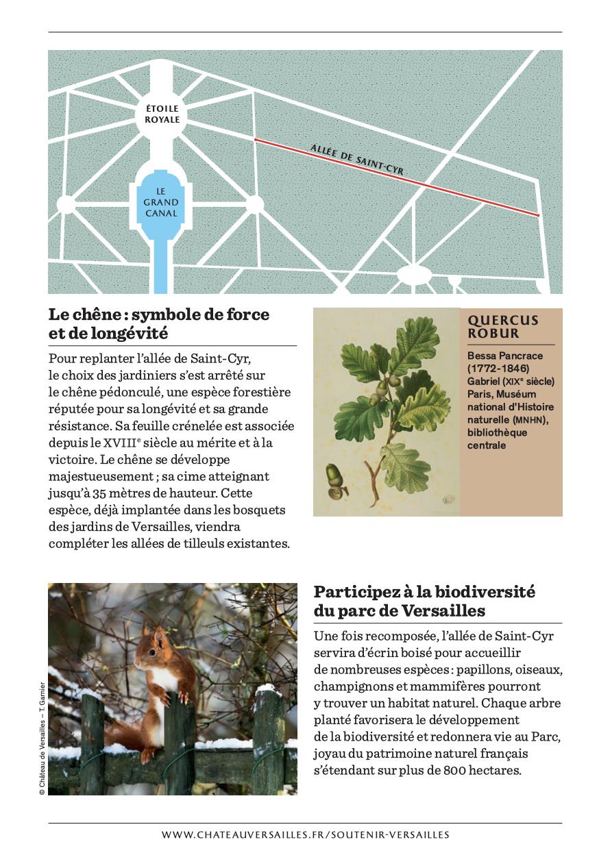 Les arbres admirables du domaine de Versailles Captu542