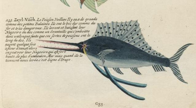 Des poissons tropicaux découverts en 1719 Captu984