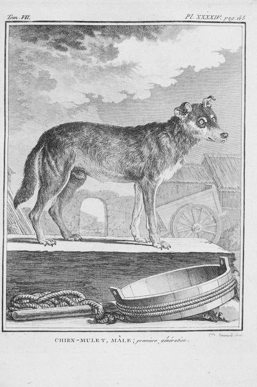 Des noms de races de chiens au XVIIIe siècle Chien-14