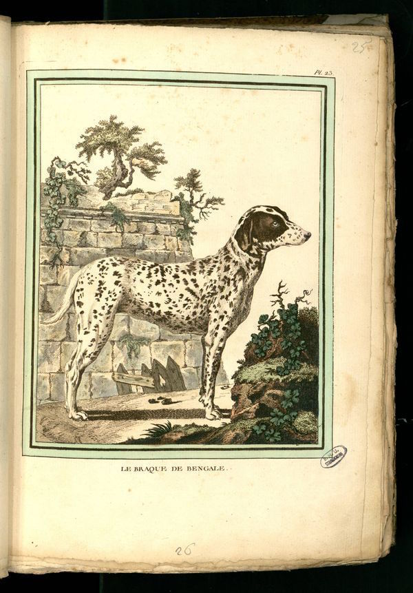 Des noms de races de chiens au XVIIIe siècle Chien-15