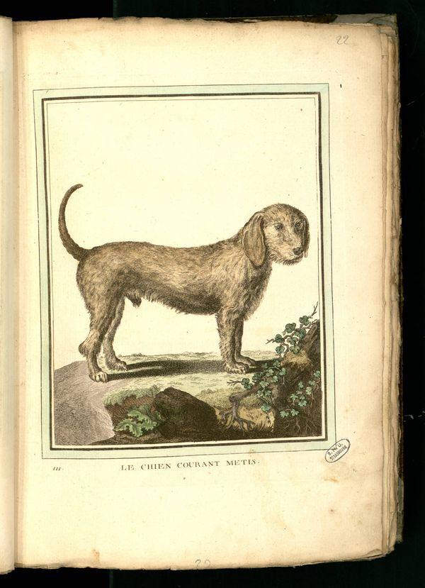 Des noms de races de chiens au XVIIIe siècle Chien-16