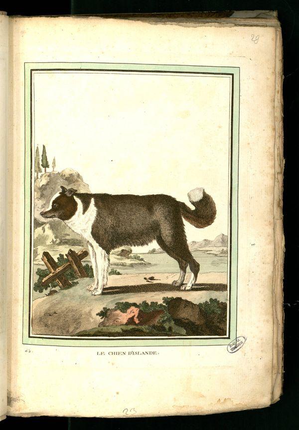 Des noms de races de chiens au XVIIIe siècle Chien-17