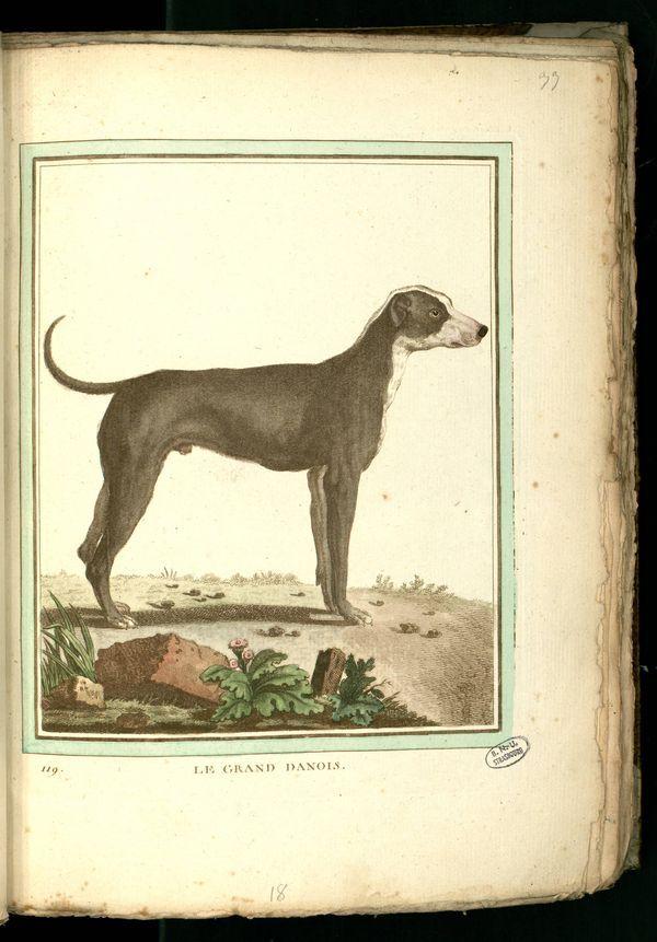 Des noms de races de chiens au XVIIIe siècle Chien-20