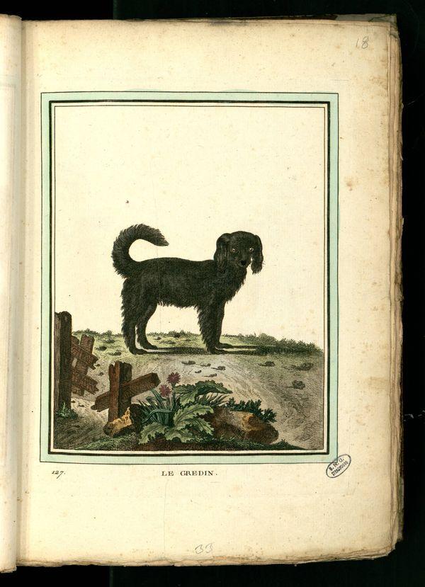 Des noms de races de chiens au XVIIIe siècle Chien-23