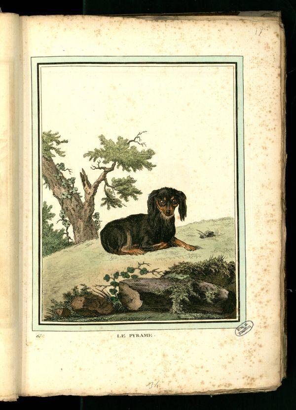 Des noms de races de chiens au XVIIIe siècle Chien-25